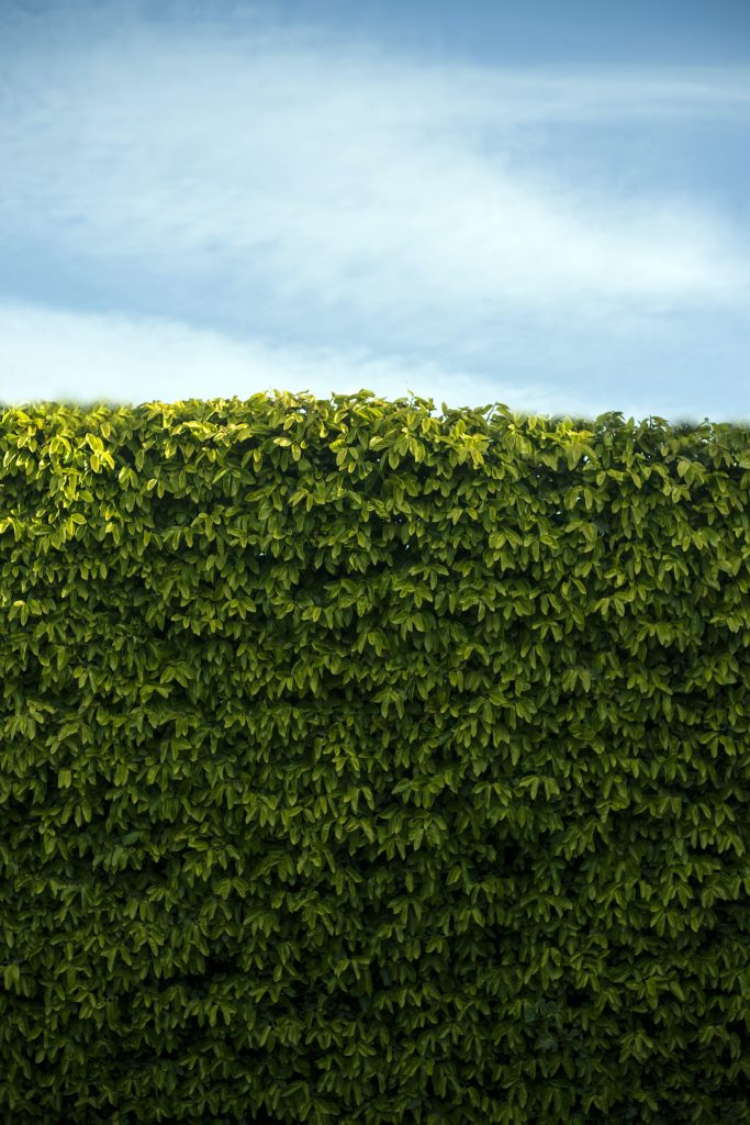 Hedge Trimming Services Near Me